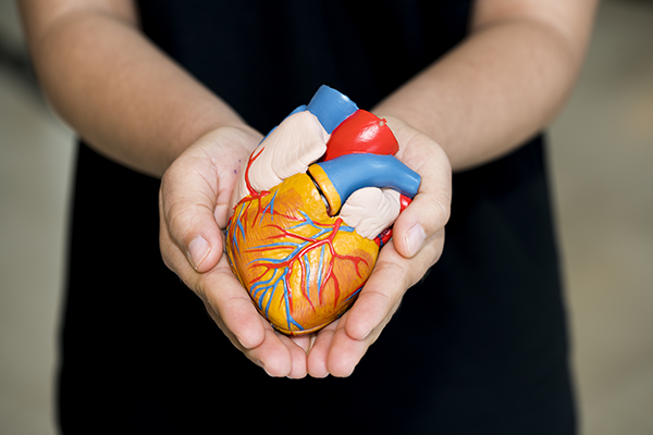 Organspenden: viel Bedarf, wenig Spender