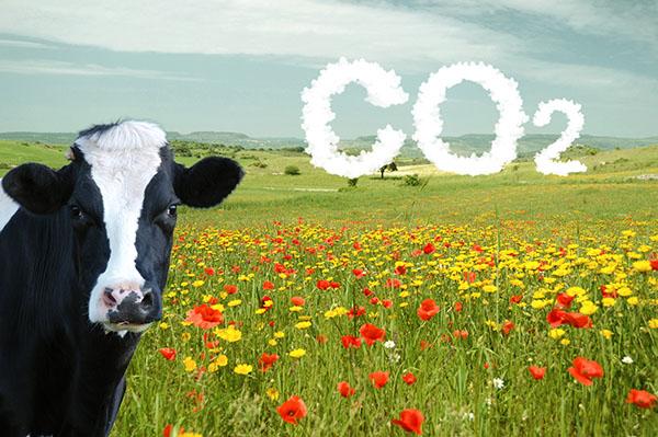 C02-Rechner: Mit weniger Fleisch zu besserem Klima?