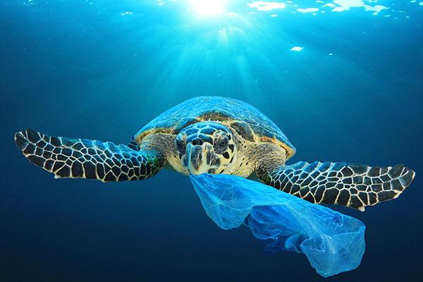 Plastikverpackung zu einem Fünftel ersetzbar